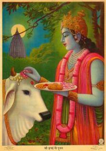 krishna cow
